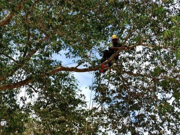 Formation A.A.F APSM Progression dans les arbres 7