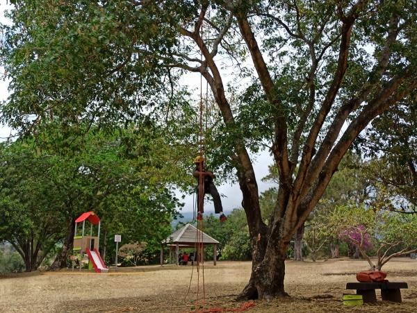 Formation A.A.F APSM Progression dans les arbres 8