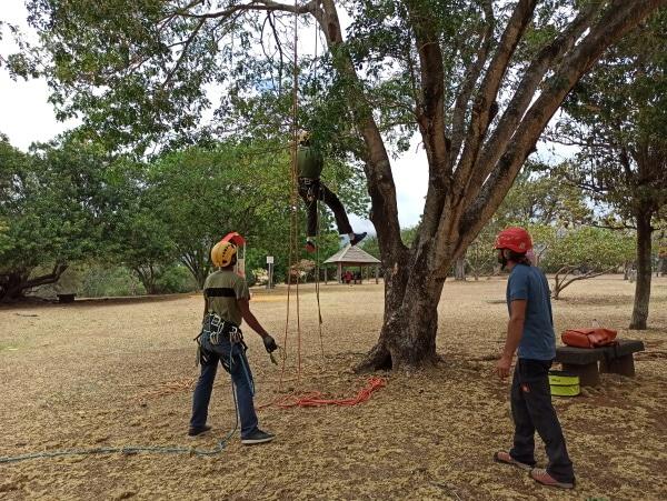 Formation A.A.F APSM Progression dans les arbres 9