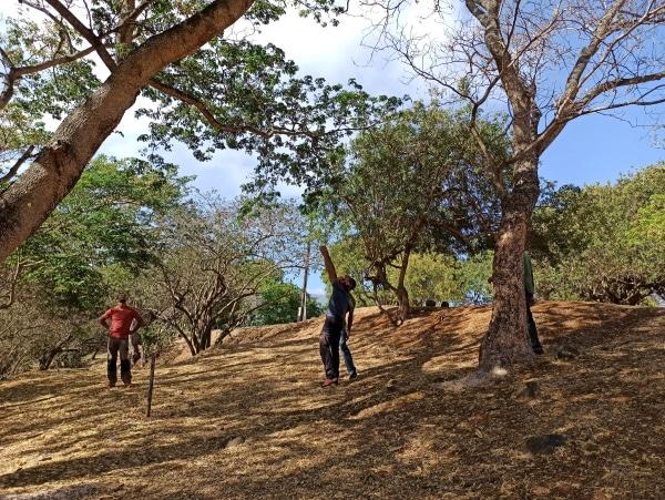 Formation A.A.F APSM Progression dans les arbres 10