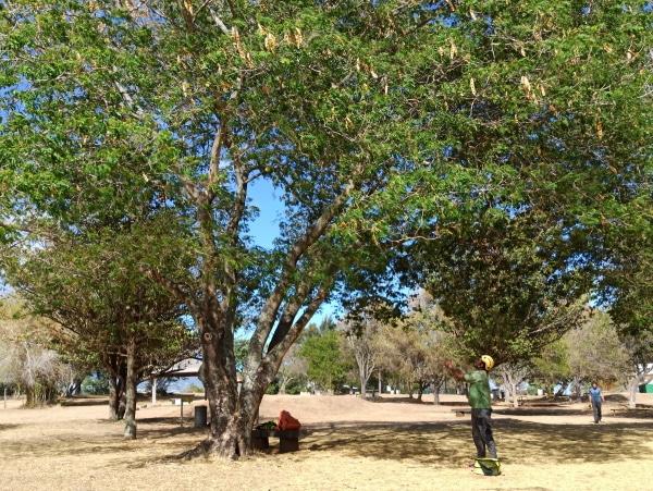 Formation A.A.F APSM Progression dans les arbres 2