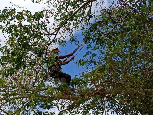 Formation A.A.F APSM Progression dans les arbres 11