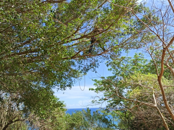 Formation A.A.F APSM Progression dans les arbres 1