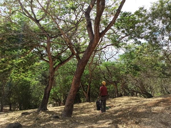 Formation A.A.F APSM Progression dans les arbres 3