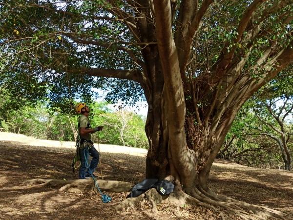Formation A.A.F APSM Progression dans les arbres 4
