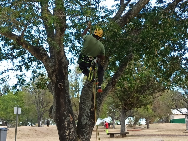 Formation A.A.F APSM Progression dans les arbres 5