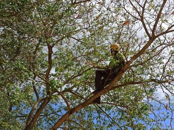 Formation A.A.F APSM Progression dans les arbres 6